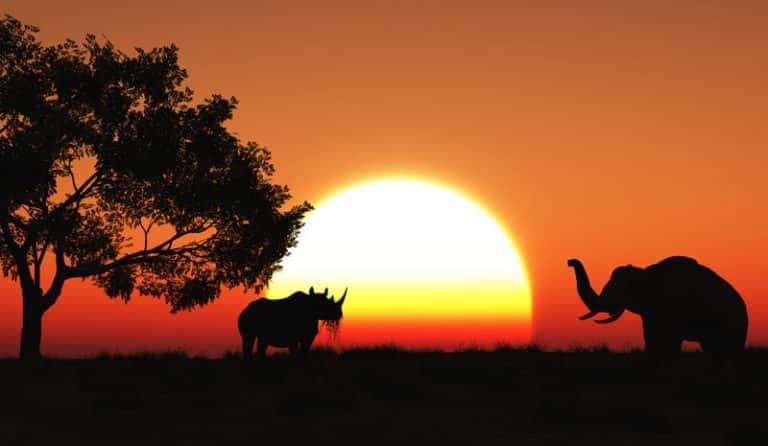 4 destinations pour découvrir l'Afrique